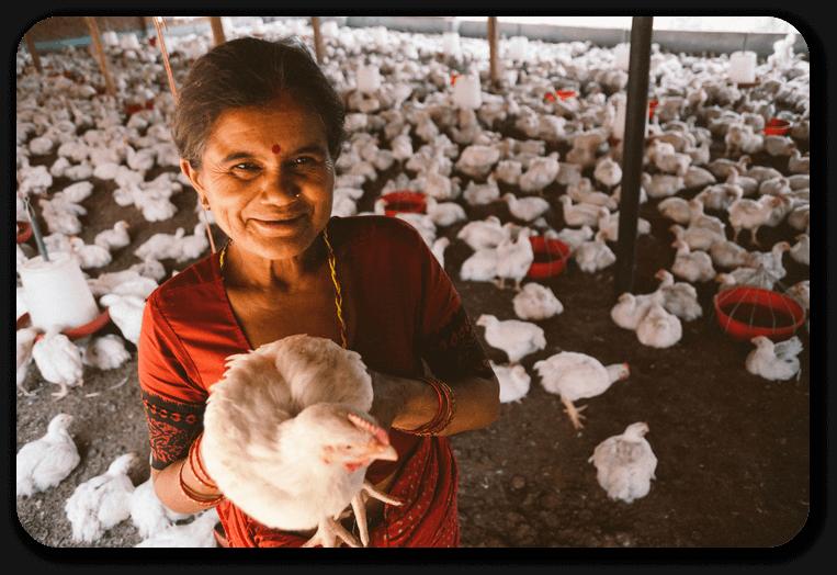 Poultry farm business